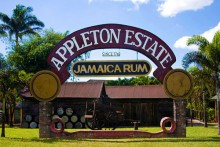 Private Transportation to Appleton Rum Estate Tour From Negril Hotels